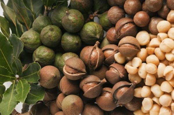 Cách ăn hạt mắc ca để có hương vị tuyệt vời
