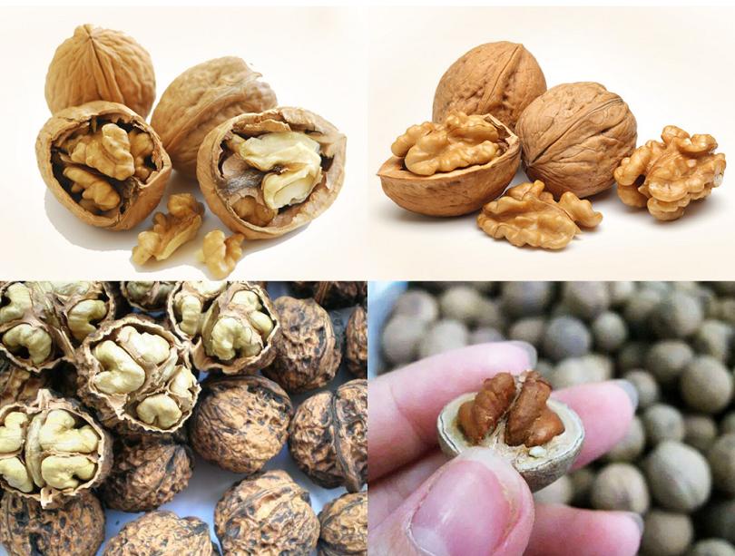 Lựa chọn đúng các loại hạt dinh dưỡng chất lượng là điều vô cùng quan trọng