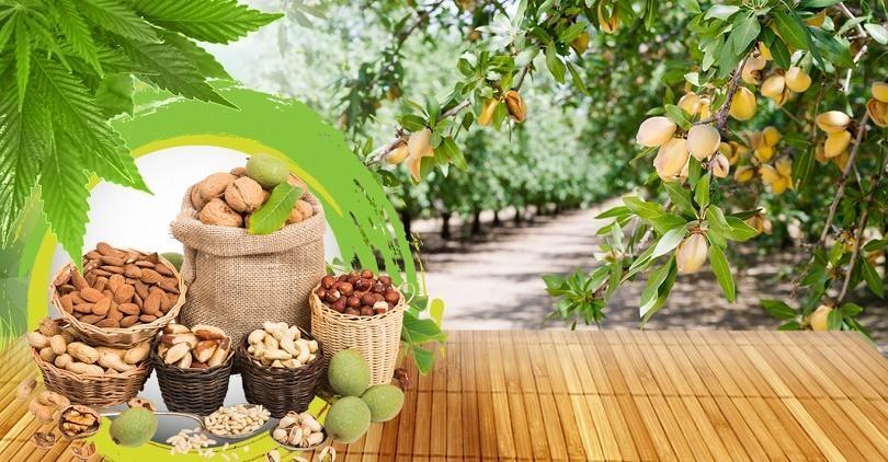 Mua hạt dinh dưỡng có xuất xứ rõ ràng